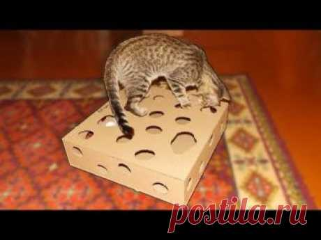Made a toy for a cat from a cardboard with own hands. The cat was very happy with a new toy, played several hours, was not tired yet. This hand-made article from a cardboard it is possible sd...