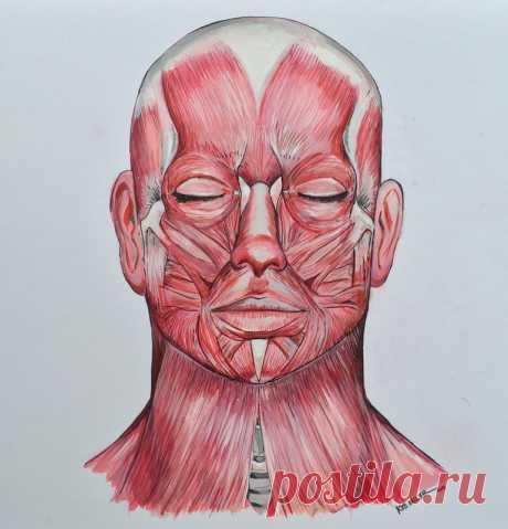 Восточный массаж: эффективное средство борьбы с аллергией | Всегда в форме!