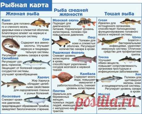 Гид по рыбам. Сохраняйте, пригодится