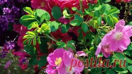Красивая музыка и цветы для моих друзей!!! (1)