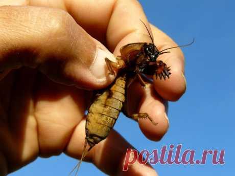 Препараты для борьбы с вредителями: проволочником, муравьями и медведкой