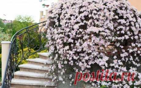 Удачное соседство: как правильно сочетать цветы на клумбе   Цветники и клумбы (Огород.ru)