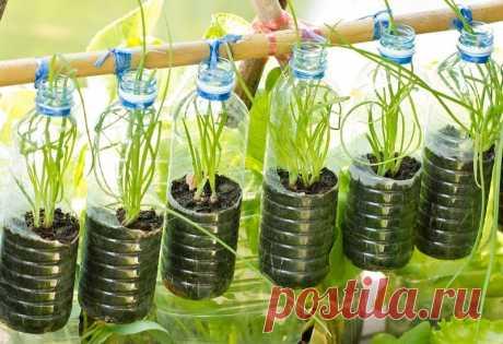Друг рассказал, как он выращивает зелень в пластиковых бутылках на балконе