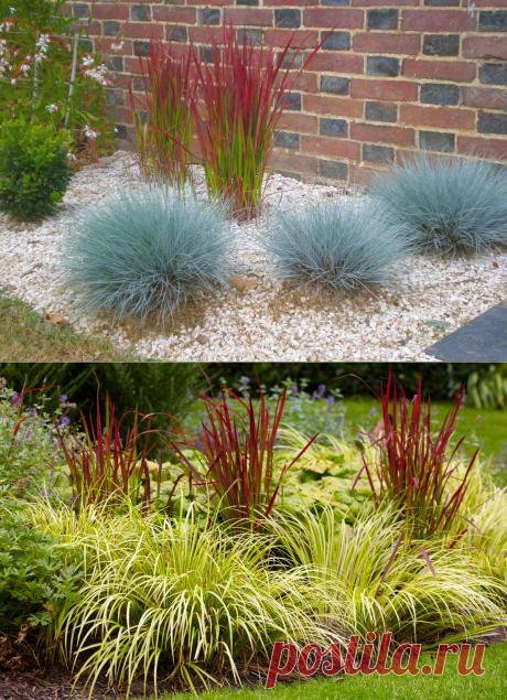 Декоративные злаки: фото и название растений, использование в ландшафтном дизайне