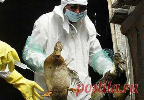 предположения о передаче вируса H7N9 от человека к человеку небезосновательны