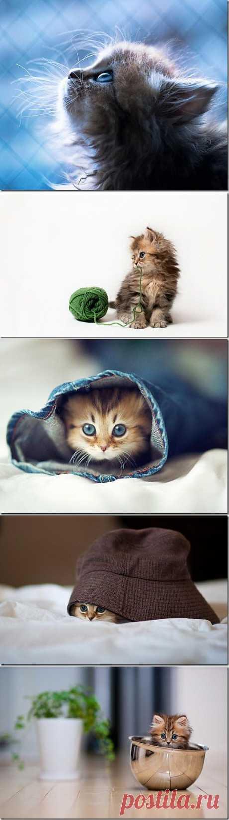 Котенок Бена Тороде | SOFTMIXER