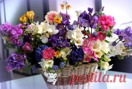 фото цветы красивые -