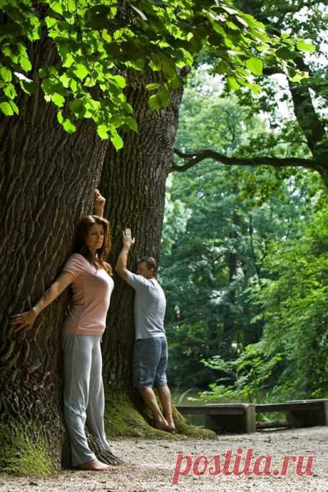 Деревья-доноры и деревья-вампиры...