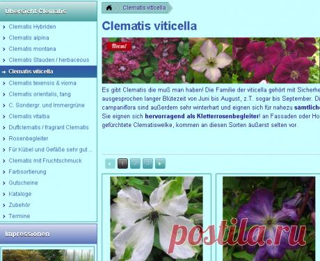 Clematis viticella - Friedrich M. Westphal Clematiskulturen