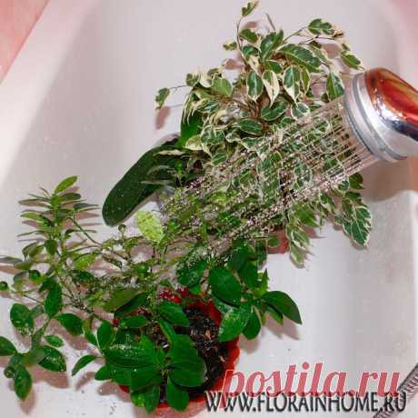 Горячий душ ... для растений.