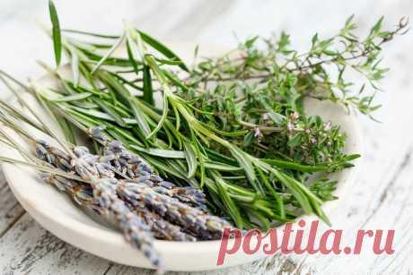 Названы лечебные травы, улучшающие кровообращение в ногах Лечебные травы в комплексе со здоровым питанием и регулярными физическими нагрузками помогут нормализовать циркуляцию крови в человеческом организме, передает «МК в Волгограде».