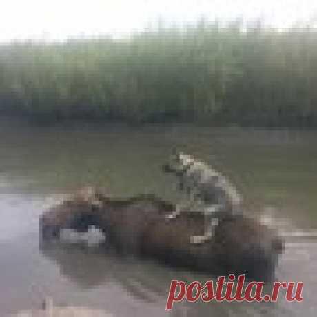 Светлана Беркут