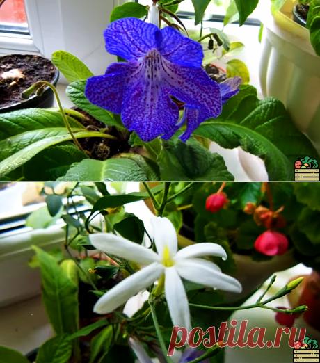 Одна капсула, и все цветы в моём доме ожили и цветут без остановки. Рассказываю, как применять аптечный препарат для цветов   6 соток