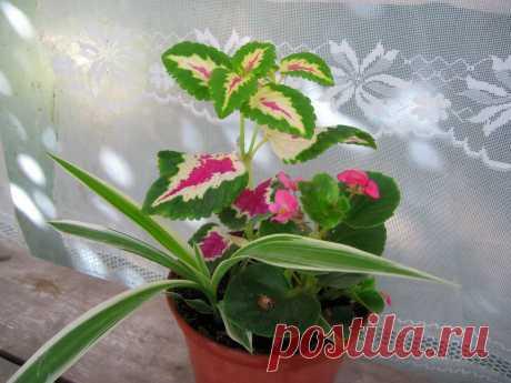 Занимаюсь горшечными цветами | Растим цветы | Яндекс Дзен