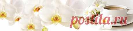 Красивый фартук белая орхидея на белом фоне, на сайте www.skinali-plus.com