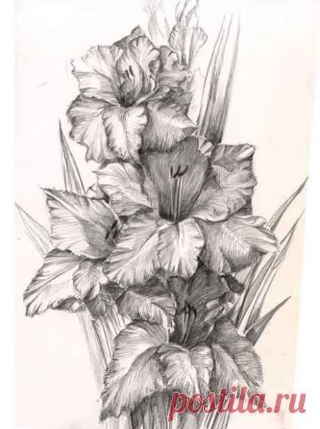 Cvety_2.jpg (Изображение JPEG, 447×600 пикселов)