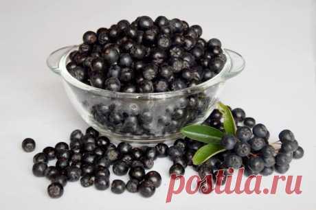 Урожай для здоровья: черноплодная рябина — 6 соток