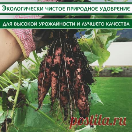 Здоровые растения без забот в огороде и дома высокая урожайность круглый год крупные мясистые плоды без химии универсальность — подходит также для комнатных растений recommendation