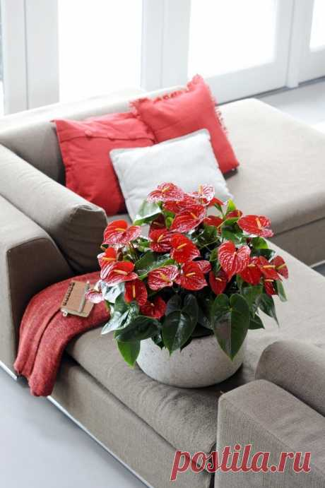 """Tell \""""no\"""": what houseplants cannot be held in the house?"""