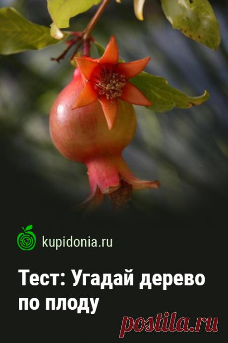 Тест: Угадай дерево по плоду. Предлагаем вашему вниманию новый развлекательный тест с картинками о растениях. Сегодня будем угадывать деревья, по плодам, которые выросли на их ветках.