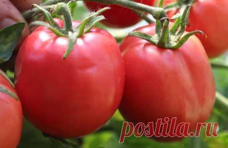 Какие сорта томатов будут лучшими для посадки в 2020 году  Выбрать самые лучшие сорта томатов на 2020 год поможет подборка на основе реальных отзывов овощеводов. Сорта представлены в виде перечня с учетом особенностей климатических зон. Описание содержит торговое наименование и краткую характеристику сорта. А также его достоинства, недостатки и фото овощей. В рейтинг вошли только самые урожайные сорта томатов на 2020 год.  Правильный выбор посадочного материала– это уже 5...