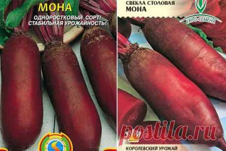 Свекла Мона: описание сорта, фото, отзывы, характеристика, достоинства и недостатки, особенности выращивания, урожайность