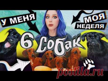 6 СОБАК - это НОРМА!? / VLOG: жиза, друзья и хрючево!