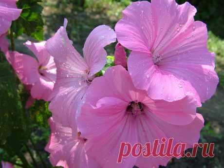 Еще цветочки. Фото Татьяны Барковой
