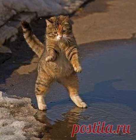 Затейник        Этот кот был замечен в марте, когда только-только солнышко пробилось наконец, сквозь неприветливые тучи. Фотограф просто не мог пройти мимо этого затейника, который то вставал на задние лапы, т…