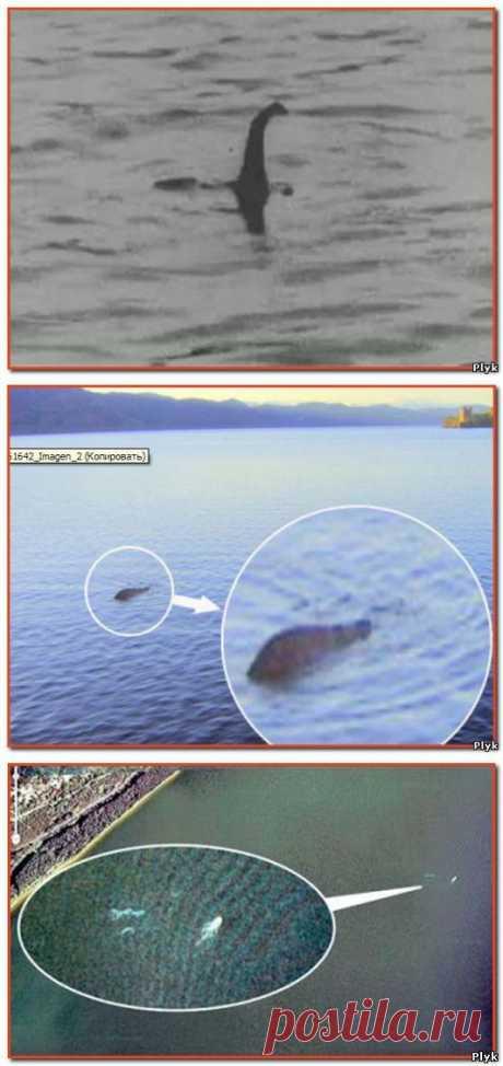 Лохнесское чудовище Несси снял Google Планета Земля | Загадочное и необъяснимое | Плюк - Обо всем на свете помаленьку