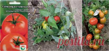 Ультраскороспелые сорта томатов. | Просветленный Агроном | Яндекс Дзен