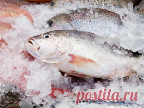 Какую рыбу не приобретет в магазине настоящий повар: основные признаки - Наш уютный дом - медиаплатформа МирТесен