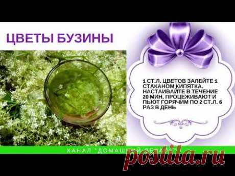 Лечебные свойства бузины - Домашний лекарь - выпуск №91