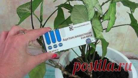 ИНТЕРЕСНАЯ ПОДКОРМКА ДЛЯ ДОМАШНИХ ЦВЕТОВ   Глюкозу и витамин В1 используют для удобрения особо ценных комнатных и кадочных растений. На 5 литров воды нужно 5 мл глюкозы и 2 мл витамина В1.   Пять-шесть поливов с интервалом в 2 недели, и ваши растения отблагодарят мощным ростом и обильным цветением.