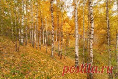 Лига фотографов Золотые горы Алматы.