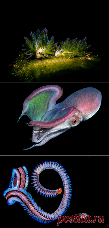 Победители Ocean Art 2019 Underwater Photography Competition | Фотоискусство