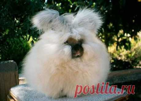 Шикарные Ангорские кролики