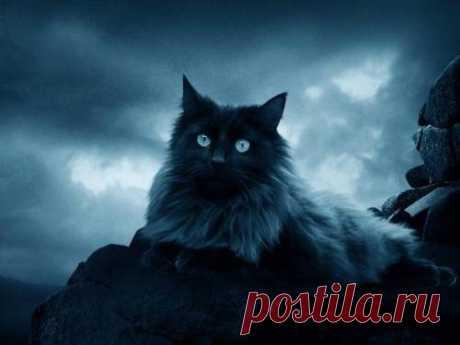 Как кошка указывает на присутствие негатива?  Кошка – одно из самых загадочных существ на нашей планете. Древние чтили кошек, в средневековье боялись, в наши дни стали любить. Не потому ли мы так относимся к кошачьему роду, что магии в одном так…