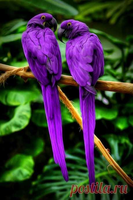 "unfrostedcupcak: ""Love birds 💜 """