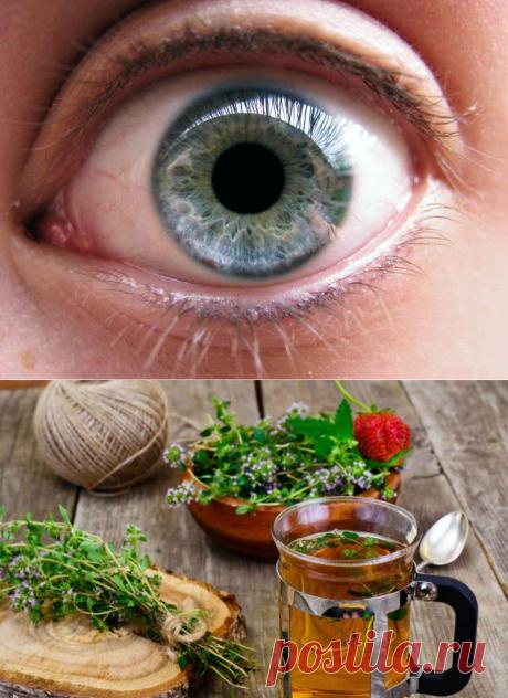 12 рецептов для хорошего зрения - Образованная Сова