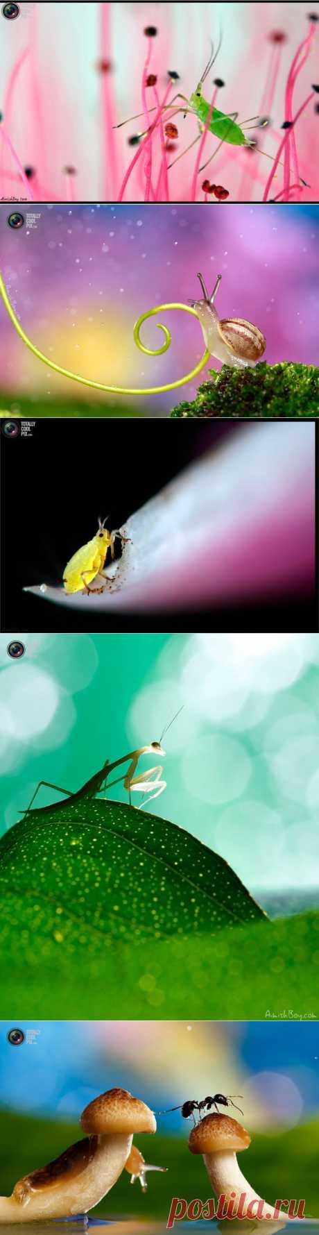 Удивительная макрофотография неожиданно гламурные насекомые и многое другое : НОВОСТИ В ФОТОГРАФИЯХ