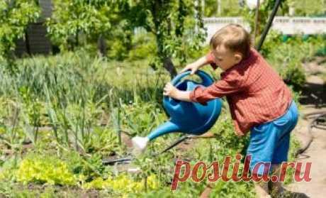 Как правильно поливать растения в огороде – советы для увеличения урожая   Долгожданный урожай овощей в большой степени зависит от правильного полива огорода. Если вы неопытный огородник и не знаете, как часто нужно поливать растения, сколько раз поливать и какой водой, вс…