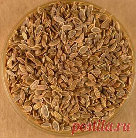 Лечебные свойства семян укропа, применение в медицине, видео Лечебные свойства семян укропа известны с древности. Изучение состава и противопоказаний к применению. Использрование отваров, настоев.