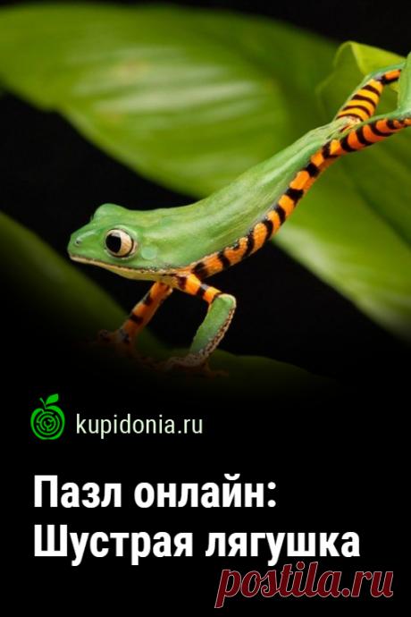 Пазл: Шустрая лягушка. Пазл онлайн с маленькой лягушкой из серии «Пазлы с животными онлайн». Собирай пазлы на сайте.