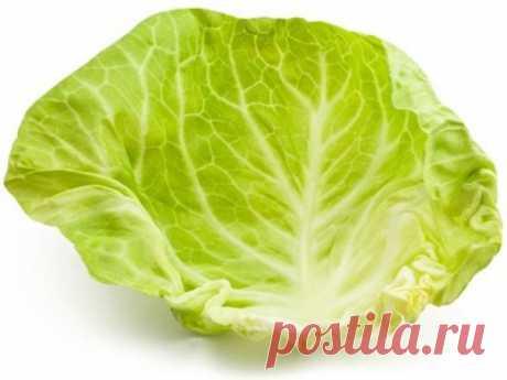 От кашля - лист капусты на грудь — Полезные советы