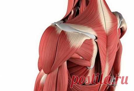 Why muscles after a long break hurt?