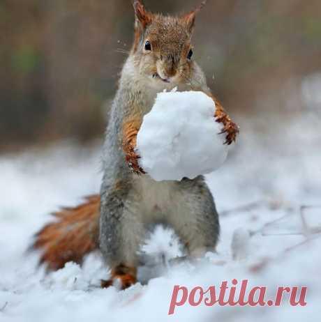 Российский фотограф делает лучшие в мире фото белочек
