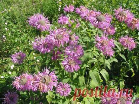 Ранозаживляющие травы помогут вылечить гнойные язвы и заболевания кожи   Будем здоровы   Яндекс Дзен