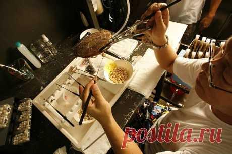 В Австралии установлен рекорд: из одной раковины извлечены 10 жемчужин | В мире