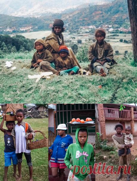 Мадагаскар: пока мы мечтаем об отпуске в колоритной стране, они живут в шалаше из глины и мечтают просто поесть | Отпуск Forever | Яндекс Дзен